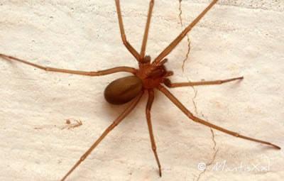Como é feita a dedetização de aranhas