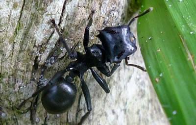 Como Eliminar Formigas